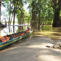 flood-forests-stung-treng